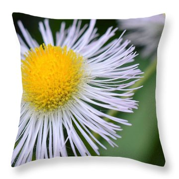 Summer Flower Throw Pillow