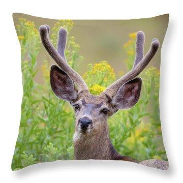 Summer Mule Deer Throw Pillow