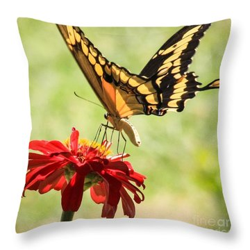 Summer Nectar Throw Pillow
