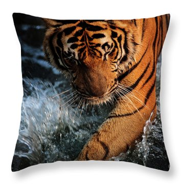 Throw Pillow featuring the photograph Summer Play by Awais Yaqub