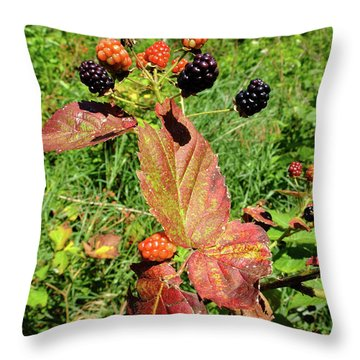 Throw Pillow featuring the photograph Summer Remnants by Scott Kingery