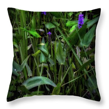 Throw Pillow featuring the photograph Summer Swamp 2017 by Bill Wakeley
