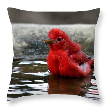 Summer Tanager In Bird Bath Throw Pillow