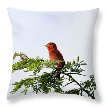Summer Tanager In Mesquite Scrub Throw Pillow by Robert Frederick