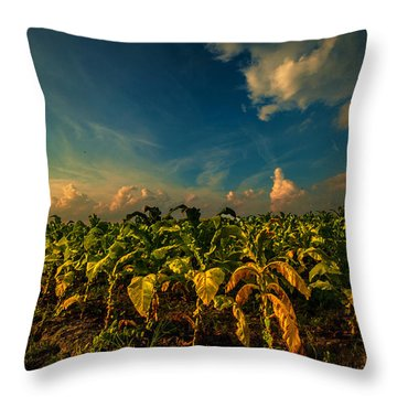 Summer Tobacco  Throw Pillow