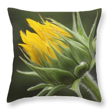 Summer's Promise - Sunflower Throw Pillow