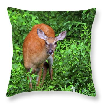 Summertime Visitor Throw Pillow by Karol Livote