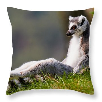 Sun Bathing Ring-tailed Lemur  Throw Pillow