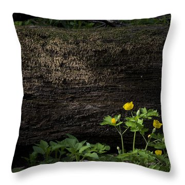 Sun Beam On Log Throw Pillow