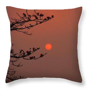 Sun Blossoms Nature Asia  Throw Pillow