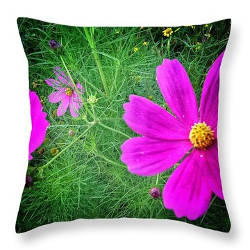 Throw Pillow featuring the photograph Sun-drenched by Olivier Calas