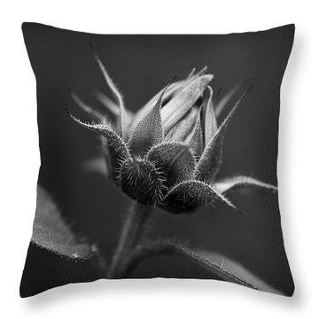 Sun Flower Blossom Bw Throw Pillow