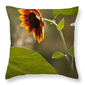 Sun Flower Throw Pillow by Chad Davis
