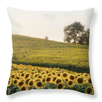 Sun Flowers II Throw Pillow