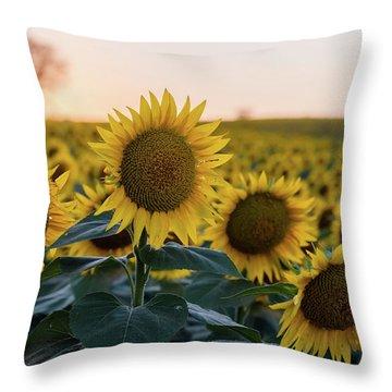 Sun Flowers IIi Throw Pillow