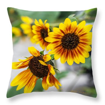 Sun Flowers In Bloom Throw Pillow by Edward Peterson