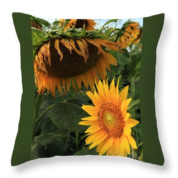 Sun Flowers  Past  And  Present  Throw Pillow