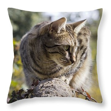 Sun-kissed Throw Pillow