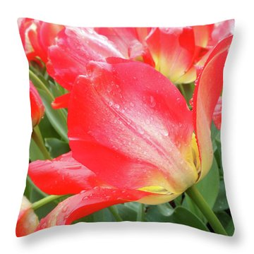 Sun Lights Tulips After Spring Rain Throw Pillow