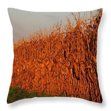 Sun-painted Cornfield Throw Pillow