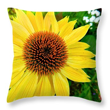 Sun Soaked Echinacea Throw Pillow