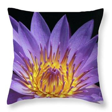 Sun Worshiper Throw Pillow by Sabrina L Ryan