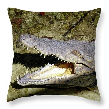 Sunbathing Croc Throw Pillow