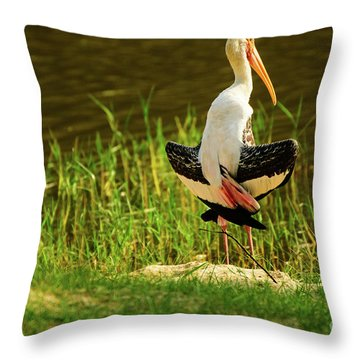 Sunbathing Delta-winged Painted Stork  Throw Pillow