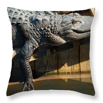 Sunbathing Gator Throw Pillow