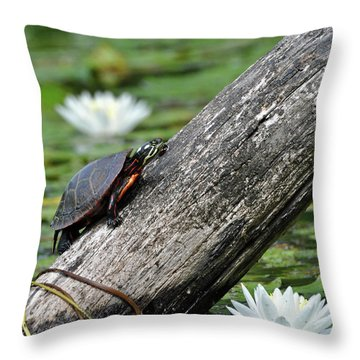 Throw Pillow featuring the photograph Turtle Sunbathing by Glenn Gordon