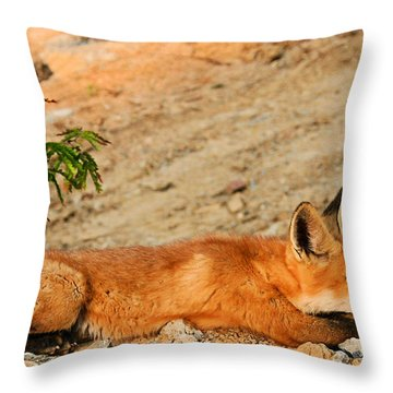 Throw Pillow featuring the photograph Sunbathing by Kristin Elmquist