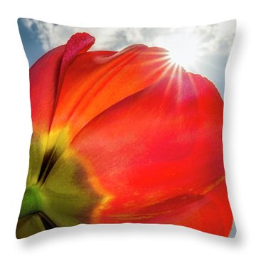 Throw Pillow featuring the photograph Sunbeams And Tulips by Adam Romanowicz