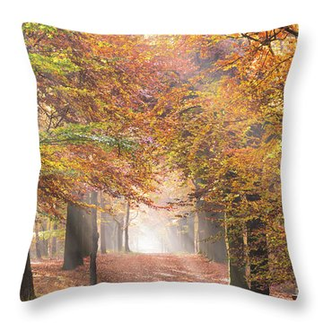 Sunbeams In A Forest In Autumn Throw Pillow