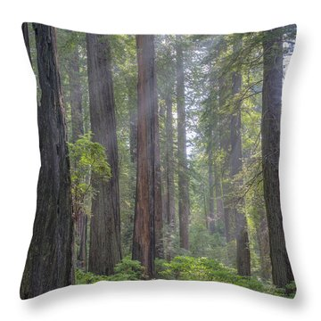 Throw Pillow featuring the photograph Sunbeams Through The Forest by Paul Schultz