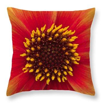 Sunburst Throw Pillow by Hazy Apple