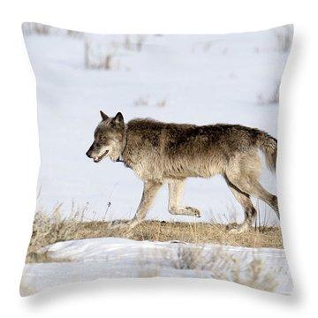 Sunday Stroll Throw Pillow
