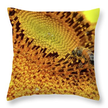 Sunflower 001 Throw Pillow by Kevin Chippindall