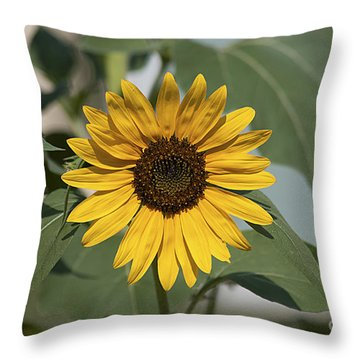 Sunflower 20120718_06a Throw Pillow by Tina Hopkins