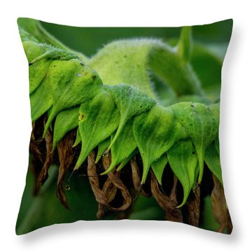 Throw Pillow featuring the photograph Sunflower 2017 1 by Buddy Scott