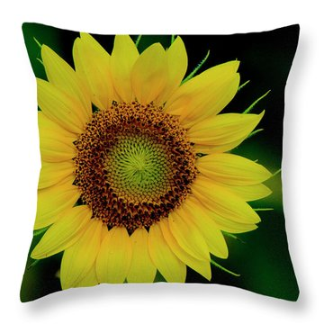 Throw Pillow featuring the photograph Sunflower 2017 10 by Buddy Scott