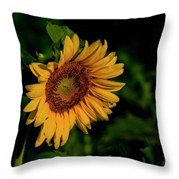 Throw Pillow featuring the photograph Sunflower 2017 11 by Buddy Scott