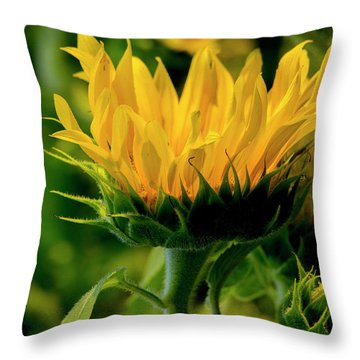 Throw Pillow featuring the photograph Sunflower 2017 13 by Buddy Scott