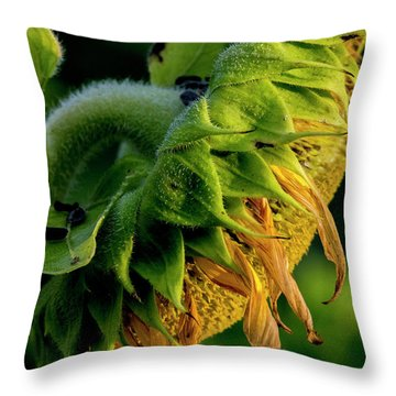 Throw Pillow featuring the photograph Sunflower 2017 14 by Buddy Scott