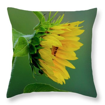 Throw Pillow featuring the photograph Sunflower 2017 2 by Buddy Scott