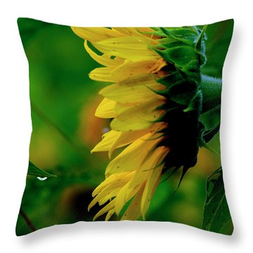 Throw Pillow featuring the photograph Sunflower 2017 3 by Buddy Scott