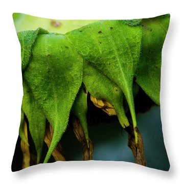Throw Pillow featuring the photograph Sunflower 2017 4 by Buddy Scott