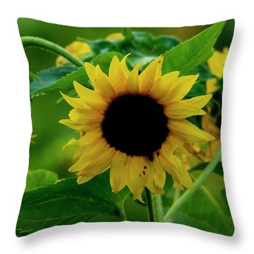 Throw Pillow featuring the photograph Sunflower 2017 5 by Buddy Scott