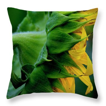 Throw Pillow featuring the photograph Sunflower 2017 8 by Buddy Scott