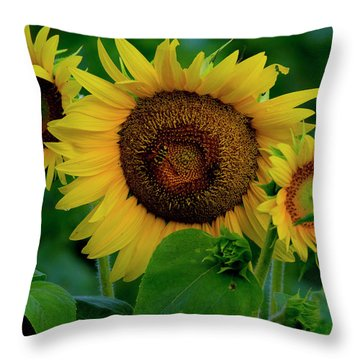 Throw Pillow featuring the photograph Sunflower 2017 9 by Buddy Scott