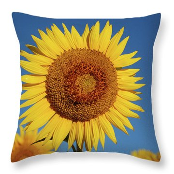 Sunflower And Blue Sky Throw Pillow